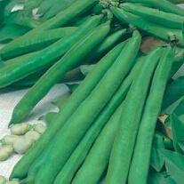 Broad Bean Aguadulce