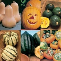 Pumpkin & Winter Squash Collection
