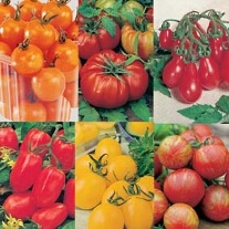 Tomato Seeds Collection