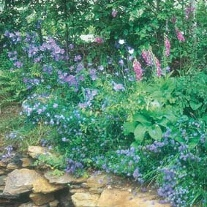 Wildflower Woodland Mixture