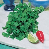 Coriander for Leaf (ORGANIC)