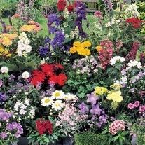 Mixed First Year Flowering Perennials