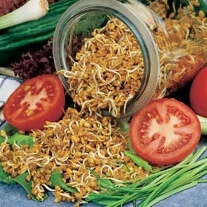 Fenugreek (Sprouting Seeds)