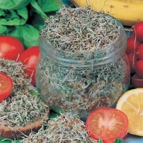 Alfalfa (Sprouting Seed)