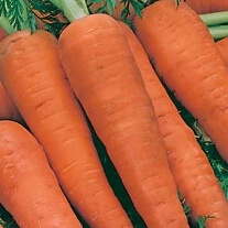 Carrot Autumn King 2