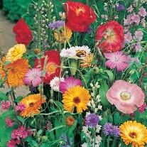 Mixed Wildlife Friendly Annuals