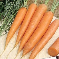 Carrot James Scarlet Intermediate