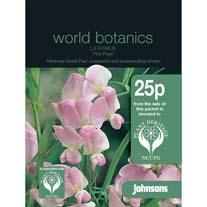 Lathyrus Pink Pearl