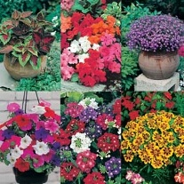 Patio Pots and Tubs Collection