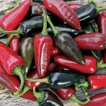 Pepper (Hot) Hungarian Black