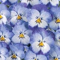 Viola Floral Power Stone Wash Denim F1