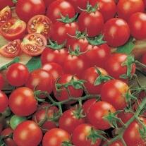 Gardener's Delight (ORGANIC) Tomato Seeds
