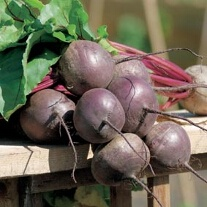 Beetroot Red Titan F1