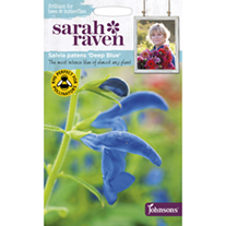 Salvia Deep Blue