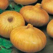 Onion (Japanese) Senshyu Yellow