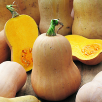 Squash Early Butternut (ORGANIC)