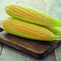 Sweet Corn Golden Bantam (ORGANIC)