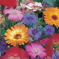 Mixed Quick and Easy Annuals