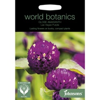 Globe Amaranth Las Vegas Purple