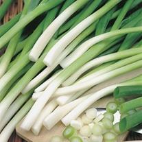Onion (Spring) Ishikura (ORGANIC)