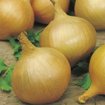 Onion Sturon (ORGANIC)