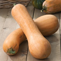 Squash (Winter) Tahiti Melon