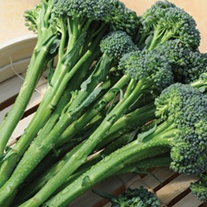 Broccoli (Tenderstem) Inspiration F1