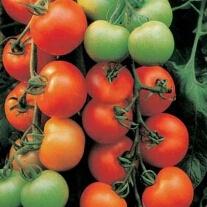 Ailsa Craig Tomato Seeds