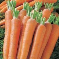 Carrot Kamila F1