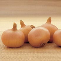 Onion Sets Centurion AGM
