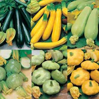 Courgette & Summer Squash Collection