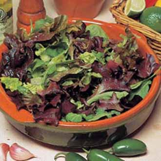 Lettuce Mixed Salad Leaves ~ 25% extra FREE