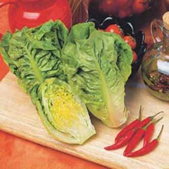 Lettuce Little Gem (Delight)