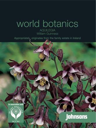 Aquilegia William Guinness
