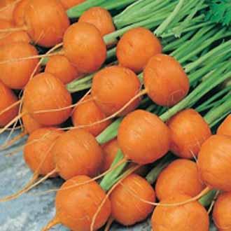 Carrot Paris Market 5 (Atlas)