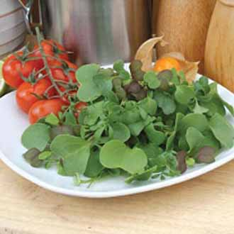 Mixed Leaves 'Gourmet Garnish'