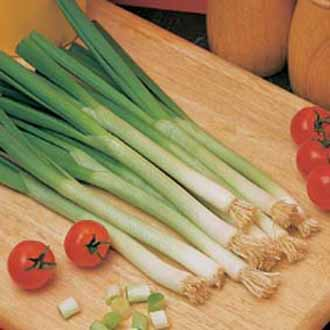 Onion (Spring) Long White Ishikura