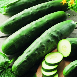 Cucumber Marketmore 70 (ORGANIC)
