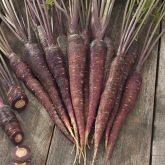 Carrot Purple Sun F1