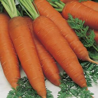 Carrot Rothild (ORGANIC)