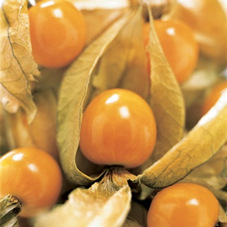 Cape Gooseberry - Physalis peruviana