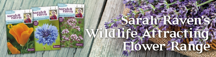 Brilliant for Bees & Butterflies|Sarah Raven Seeds from Johnsons
