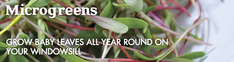Microgreens Vegetable Seeds from Johnsons